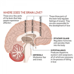 Love Pheromones: The Science Of Falling In Love (Dopamine, Oxytocin?)